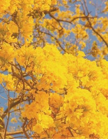 Chácara Flor da Suissa - Árvores