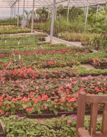 Chácara Flor da Suissa - Flores em Caixa