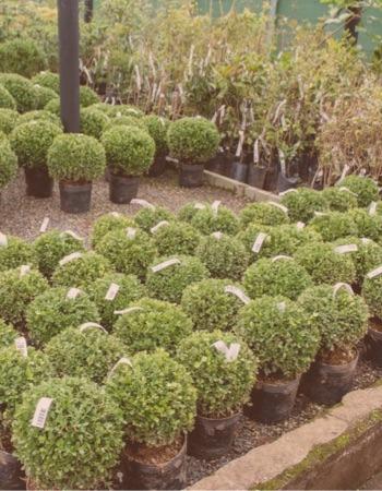 Chácara Flor da Suissa - Arbustos