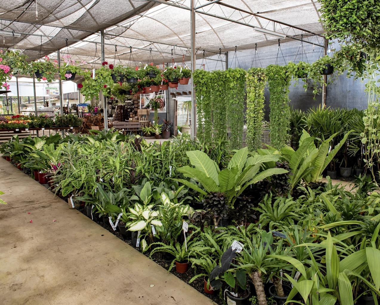Flor da Suissa - Floricultura e Garden Center