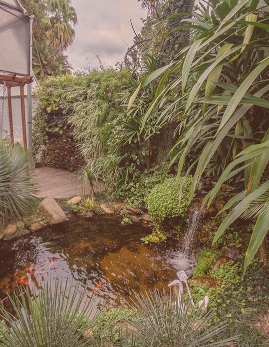 Garden Center - Flor da Suissa
