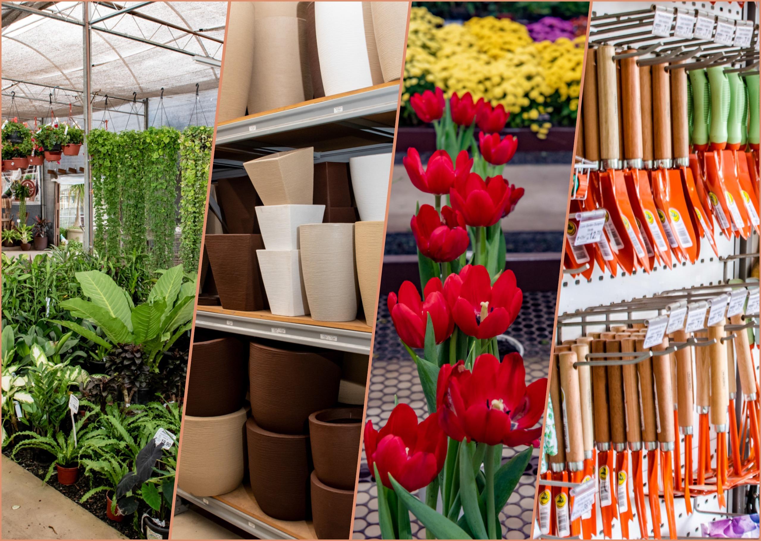 Flor da Suissa - mais de 10000 produtos